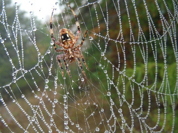 Spiders In Dreams Meanings And Interpretations
